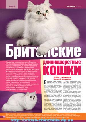 Британские длинношерстные - журнал Зообизнес №7 2011