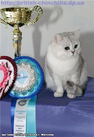 выставка кошек в Житомире