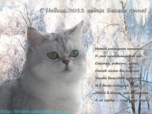 новогодние открытки с британскими шиншиллами кошками