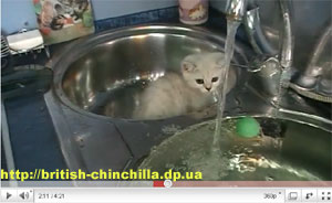 видеоуроки уход за кошками