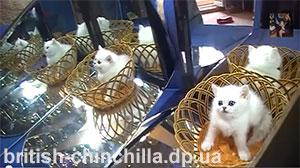 Видео котята в Зазеркалье