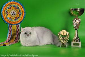 Британский длинношерстный кот шинишлла Анно Домини Воздух Времени